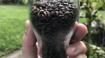 roasted barley in glass